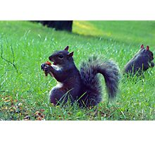 Squirrel Meal Time-Urban Wildlife Photographic Print