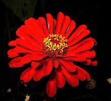 Red  by Maria Hernandez