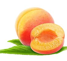Apricot #10 by 6hands