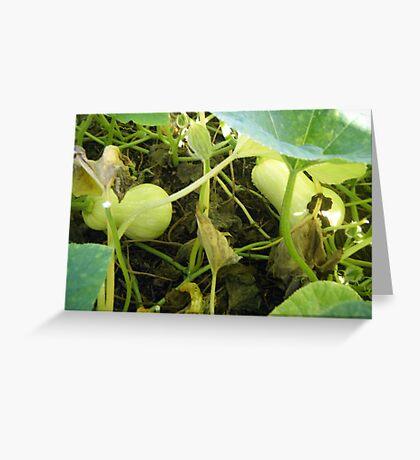 Butternut Pumpkin Greeting Card