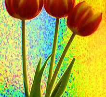 Trio of Tulips  by SparklyTights