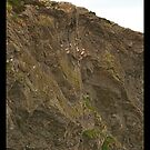 Rock Climbers's Mecca - Howth by Ferdinand Lucino