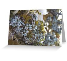 My vineyard  Greeting Card
