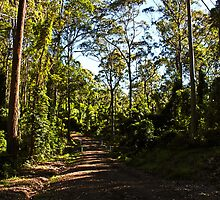 Country Road- Narooma by Evita