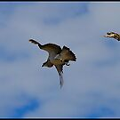 Flying at the Beach by AlexKokas