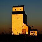 Golden Meadows by Larry Trupp