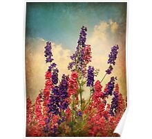 Delphiniums (Textured) Poster