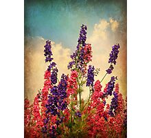 Delphiniums (Textured) Photographic Print