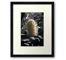 Banksia with Focal B&W Framed Print