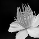 Flower in Black and White by Edward Myers
