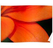 Orange Asiatic Lily 2 Poster