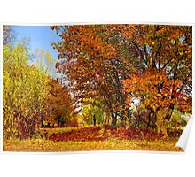 Autumn colors of nature Poster