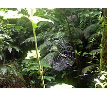 Green Orb Web Spider Photographic Print