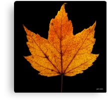 Yellow Autumn Leaf Canvas Print
