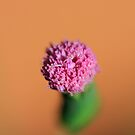 The Tiny Pink Flower - I mean TINY by AlexKokas