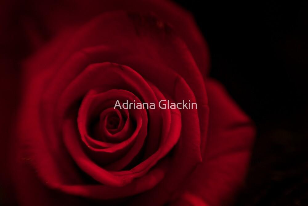 Happy Anniversary ♥ by Adriana Glackin