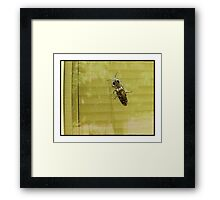 Bug on Screen Framed Print