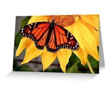 """""""Male Monarch and Sunflower"""" Greeting Card"""