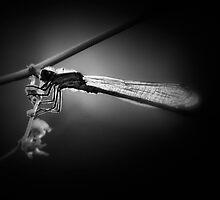 Jazz Fly by Bob Larson