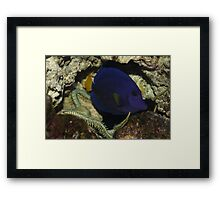 Terry the Tang Framed Print