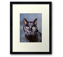 I think I'm in trouble Framed Print