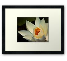 Water Lily (10) Framed Print