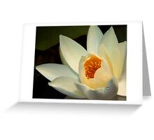 Water Lily (10) Greeting Card