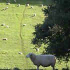 Meek as a Lamb by iskamontero