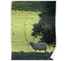 Meek as a Lamb Poster