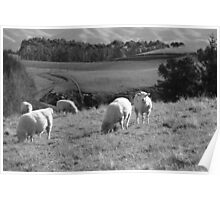 More Than One Sheep On A Hill Poster