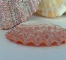 Shells by Liusha T