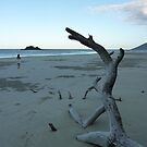 Cape Tribulation Beach by Jason Langer