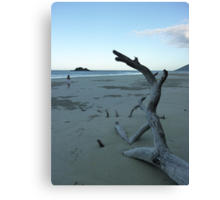 Cape Tribulation Beach Canvas Print