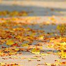 Golden Leaves by Azmi Zakariah