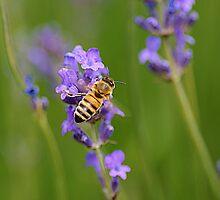 Lavender&bee by Hetty Mellink