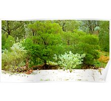 River bank vegetation Poster