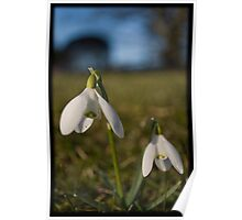 A little sprintime flower called the Snowdrop Poster