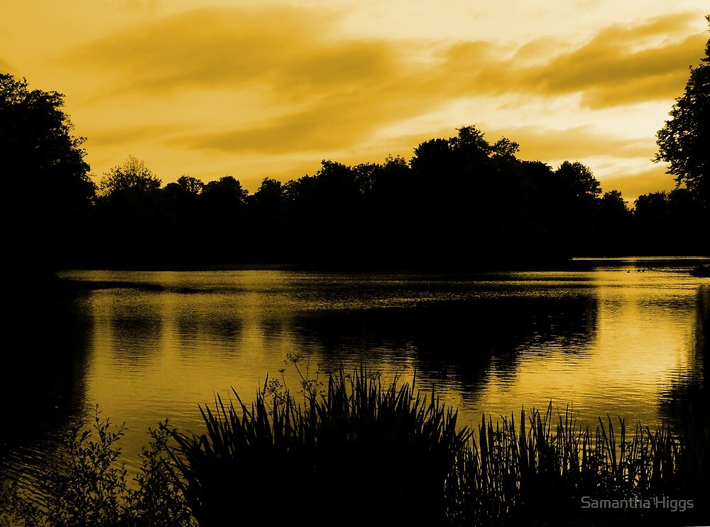 Reflections In Orange by Samantha Higgs