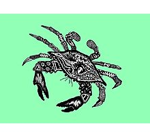 Blue Crab on Green Photographic Print