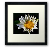 May a Daisy Brighten Your World Framed Print