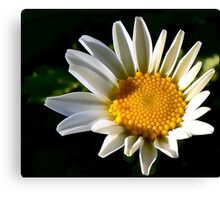May a Daisy Brighten Your World Canvas Print