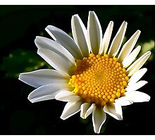 May a Daisy Brighten Your World Photographic Print