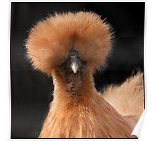 Fine feathers make fine birds Poster