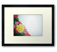yellow rose with red tips Framed Print