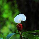 White Wild Flower by Azmi Zakariah