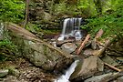 Kitchen Creek At B. Reynolds Falls In Ricketts Glen by Gene Walls