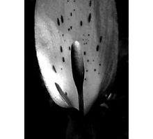 Wild Arum Photographic Print