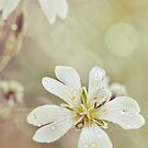 tiny tiny creature, tell me what it's like to be so small., by subtitulo