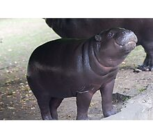 Smile - pygmy hippo baby with infectious grin Photographic Print