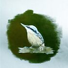 Nuthatch - looking for a mate by Lesley Rowe